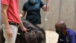 Elefante bebé morre 27 dias após ter nascido em zoo dos EUA
