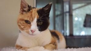 Encontram gata desaparecida há 12 anos devido ao novo coronavírus