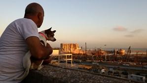 A única coisa que resta a Michel é Pepsi, o cão que sobreviveu às explosões de Beirute e que nunca largou o dono
