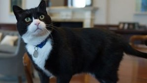 """Há um gato diplomata que vai abandonar a """"vida pública"""" por """"estar farto dos holofotes"""""""