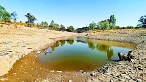 Baixo Alentejo e Algarve sofrem mais com a seca