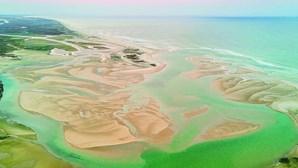 Espécies invasoras alastram no mar do Algarve