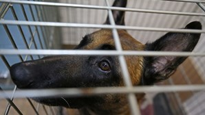 Cão mata menina de 2 anos em festa de família