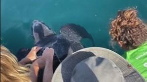 Tartaruga encontrada presa em redes de pesca em Alvor