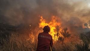 Bombeiro ateia fogo para caçar javalis na Covilhã