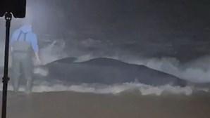 Baleia dá à costa em praia de Santa Cruz