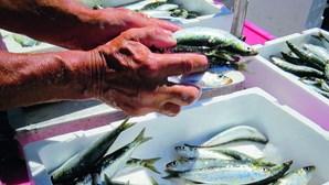 Pesca no Algarve rendeu 21 milhões de euros em seis meses