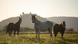 """""""Superstição, fetichismo, ritual satânico"""": autoridades investigam mistério de 10 cavalos mortos e mutilados"""