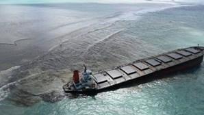 Encontrados 25 cetáceos mortos perto do local onde navio derramou petróleo nas Maurícias
