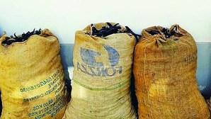 Apanhados em flagrante com 140 quilos de alfarroba dentro de sacos em Castro Marim