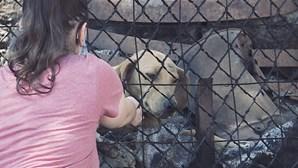 Noite de terror em abrigo para animais em Santo Tirso gera onda de indignação contra espaços ilegais