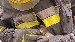 Gato bebé é salvo pelos bombeiros de Amora e já foi adotado