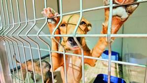 Unidade de Boliqueime vai salvar animais em perigo