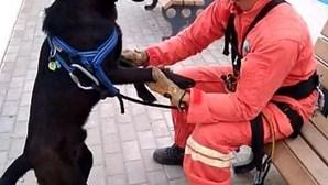 Bombeiros da Ericeira salvam cão numa ravina da Praia do Sul