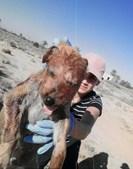 Animais foram torturados