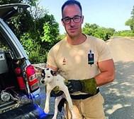 GNR salva quatro cães bebés