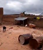 Abrigo para animais onde o menino foi resgatado