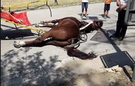 Cavalo morto em Itália
