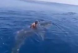 homem, tubarão baleia