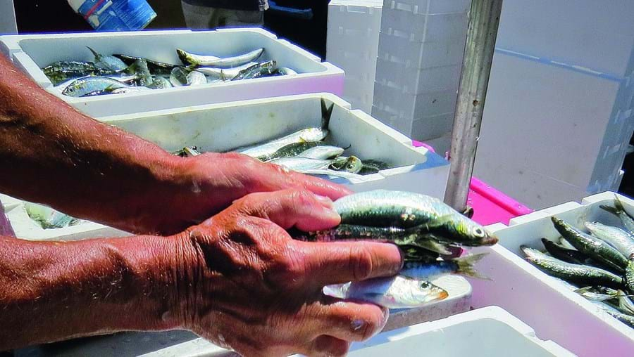 Peixe nas lotas algarvias