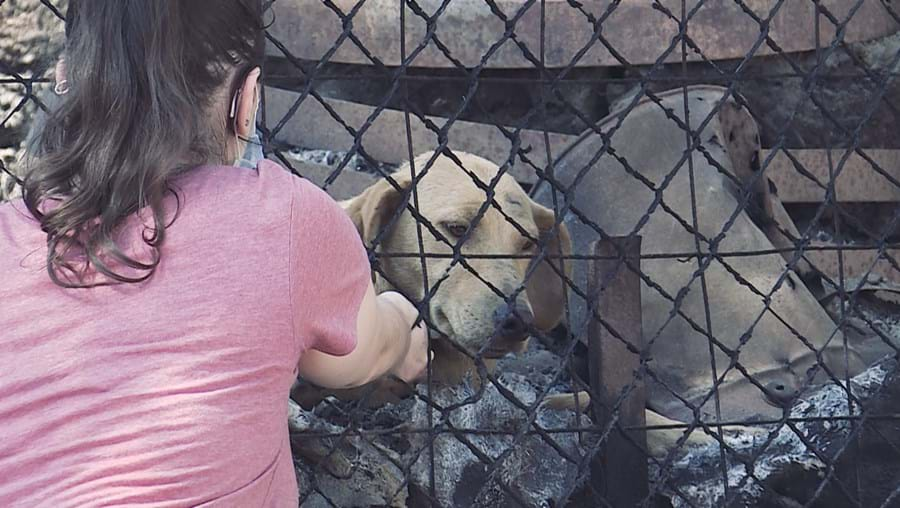 abrigos ilegais, animais, Santo Tirso