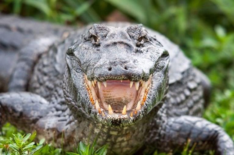 Corpos eram dados aos crocodilos
