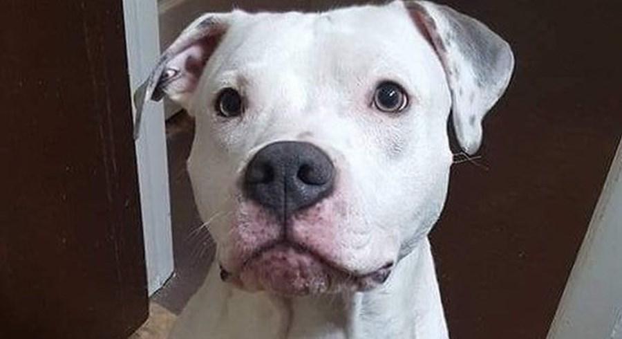 Menino ficou em risco de vida após ataque do cão da família
