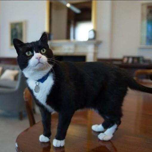 Gato Palmerston