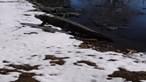 Jacarés em banhos de sol na neve? Sim, aconteceu nos Estados Unidos. Veja as imagens