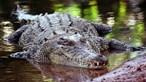 """Português atacado por crocodilo diz que sentiu um """"choque muito grande nas costas"""""""