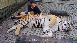 'Instagrammer' criticada por apertar testículos a tigres