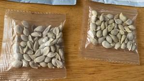 Recebeu sementes misteriosas através do correio? Não as plante nem deite no lixo
