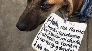 """""""Ajuda-me por favor"""": Cão encontrado com mensagem ao pescoço após dona morrer com Covid-19"""