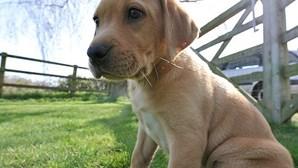 Cadela de seis meses morta no quintal de casa enquanto dono trabalhava