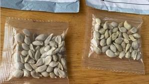 Governo alerta para chegada de sementes misteriosas da China através do correio