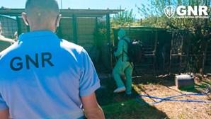 Proprietária de abrigo para cães detida por maus-tratos a animais em Gouveia