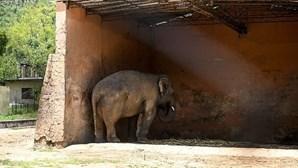 """Elefante """"mais solitário do mundo"""" mantido em cativeiro durante 35 anos é libertado"""