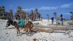Burros invadem cidade na ilha da Boa Vista em Cabo Verde à procura de água e alimentos