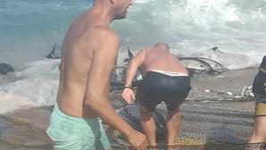 Grupo de 10 golfinhos preso em redes de pesca na praia de Mira, em Coimbra. Dois morreram