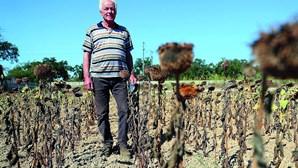 Duzentas famílias sem água do Sado para cultivar a terra