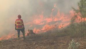 Fogo em Ourém ameaçou casas e mobilizou mais de 300 bombeiros