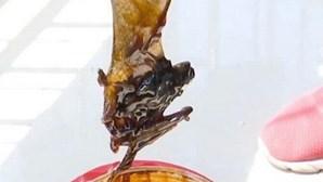 Homem encontra morcego morto dentro de frasco de molho que estava a comer há meses