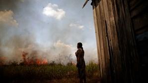Desflorestamento na Amazónia brasileira bate recorde em abril