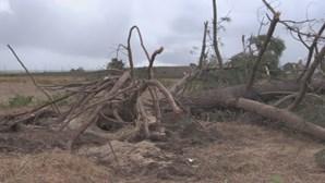 Mau tempo causa estragos de Norte a Sul