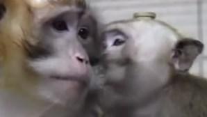 Cientistas perfuram crânios de macacos em testes cruéis na Europa