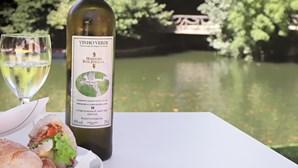 Vinhos verdes e petiscos: fins de tarde em Braga prometem ser 'verdes e cool'