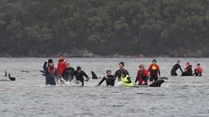 Equipas de resgate trabalham para salvar 20 baleias na Austrália