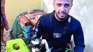 Bombeiros salvam gato em Faro. Veja as imagens