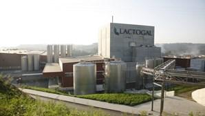 Lactogal vai aumentar em 1,5 cêntimos valor pago por litro a cooperativas