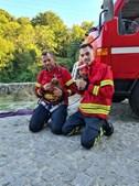 Bombeiros de Riba de Ave resgataram dois cães bebés que se encontravam junto ao leito do rio, na freguesia de Bairro.